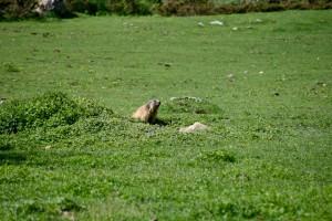 Et bien-sur la marmotte sans le papier d'alu